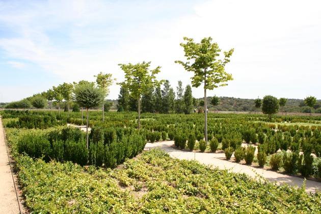 Jardín de Palacio (4)