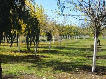 Olivos de la Antigua Huerta