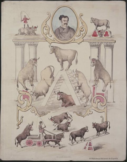 Debut de cuatro toros amaestrados en libertad]. Circo Price